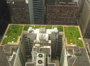 While green roofs certainly won't solve the global warming problem, their ability to sop up greenhouse gases — even just a little bit — bolsters the case for planting them on city buildings.