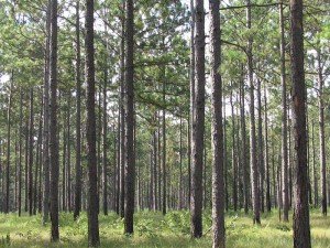 Wood is much cheaper in the US than in Europe with its restricted wood land availability.