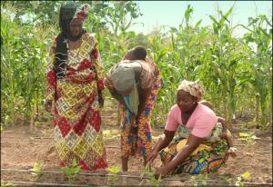 Innovative Solar Market Garden Transforms Women's Lives through Technology